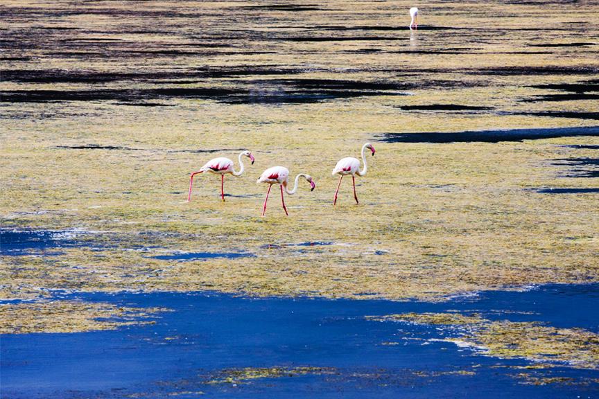 Flamingai Sicilija Skrendu.lt pigu