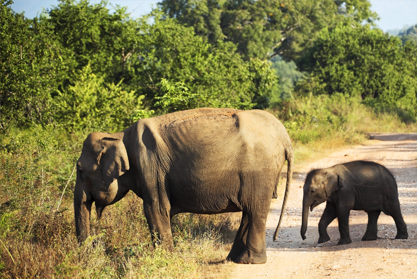 Drambliai Šri Lanka egzotinės kelionės Baltic tours