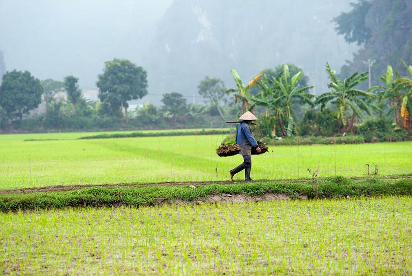 Pigūs skrydžiai į Vietnamą. Keliauk pigiau kelionės egzotika Baltic Tours
