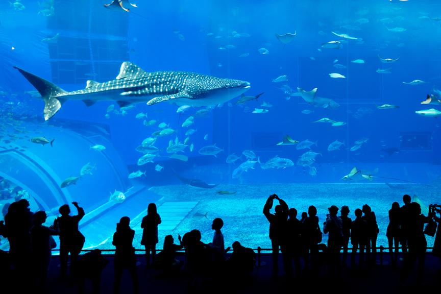 Akvariumas Skrendu.lt Dubajus