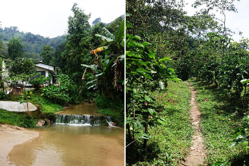 Džiunglės ir Kolumbija