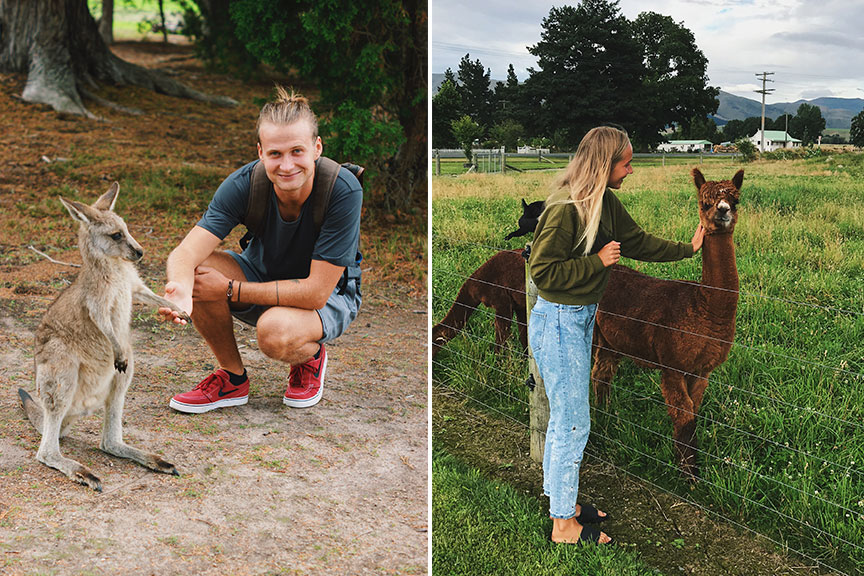Jaunuolis su kenguryte ir mergina glostanti alpaką
