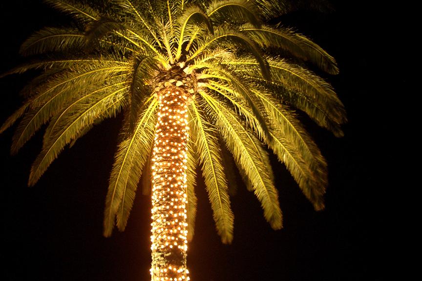 Lemputėmis papuošta palmė