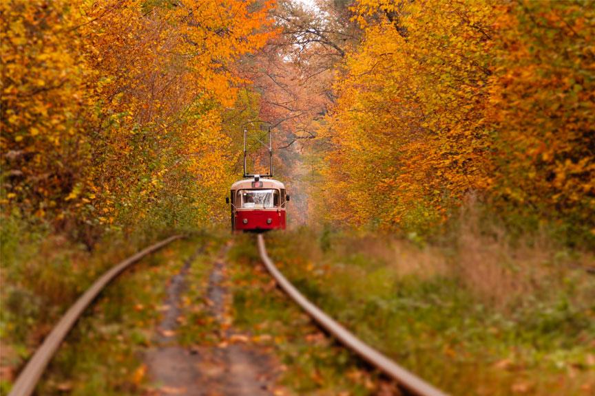 Tramvajaus maršrutas mišku Kijeve
